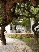Garden path leading between gnarled trees with view of furnished terrace of country house