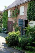 Ivy, vine and rose climbing up brick building with original, old stable doors and box shrubbery in foreground