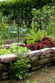 Flowering ox-eye daisies in front of raised bed of lettuces and vegetables with reclaimed brick wall