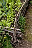 Raised bed edged by woven branches in cottage garden