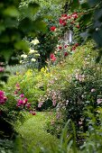 Flowering plants in natural-style garden