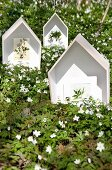 Floral postcards in house-shaped display cases amongst carpet of flowering wood anemones