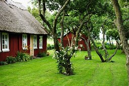 Gnarled trees in well-tended garden of Swedish wooden house with thatched roof