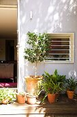 Potted plant on sunny wooden terrace outside house with open terrace door