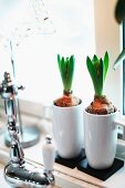Hyacinth bulbs in white china beakers on windowsill behind vintage tap fitting