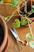 Scissors between potted plants on wooden surface
