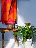 Bromelie in hellem Topf neben rustikalem Holzschemel mit Badutensilien, dahinter aufgehängtes Handtuch