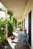 Hen and side table on veranda planted with roses outside long, weatherboard country house
