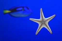 Starfish & fish in aquarium