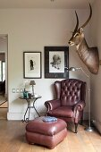 Leather armchair with footstool below imposing hunting trophy in corner