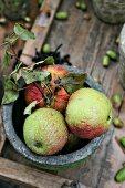 Nasse Äpfel in einer Schale