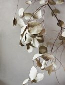 Pale grey branch with dried leaves against pale wall