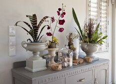 Vintage planters and glass covers over natural finds on top of cabinet painted pale grey