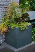 Various foliage plants in grey, square planter on plinth in front of stone wall