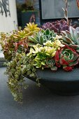 Bowl planted with various succulents