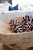 Seashells in rustic wooden dish