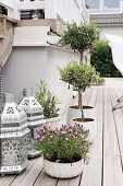 Lavender, small olive tree and Oriental-style lanterns on wooden terrace