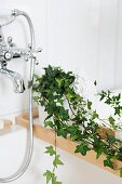 Potted ivy on edge of bathtub with retro tap fittings