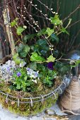 Spring arrangement of pussy willow and ivy in wire basket of moss
