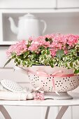 Pentas and creeping fig planted in old colander