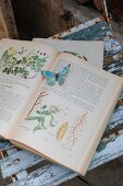 Antiquarian plant book with paper butterfly