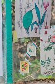 Vintage botanical illustrations stuck on greenhouse windows