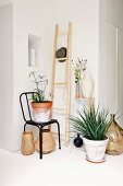 Plant pots on floor and black chair and white jug in niche in corner of minimalist room