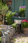 Zinc watering cans, flowers and pot plants in various containers on a paved area in a garden