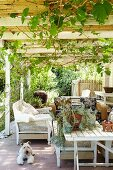 Seating on terrace below climber-covered pergola; succulents on white-painted wooden table and dog lying on floor