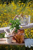 Gardening utensils, potted plant and copper watering can on rustic bench in field of yellow flowers