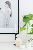 Sprig of ivy in small, white vase and house plant next to black-framed picture of girl