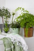 Towel and various potted plants on edge of bathtub