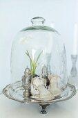 Vintage Kinderschuhe und Silbergefässe unter Glashaube auf Silberteller