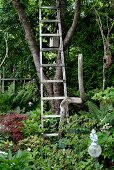 Wooden ladder leaning against tree in densely planted garden