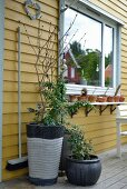 Shrubs in various planters outside yellow wooden house