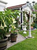 Weisse Engelstrompete im Pflanzentrog auf Terrasse und weisse Vintage Standlaterne im Garten