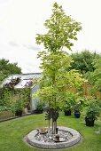 Baum in kreisförmigem Beet mit Steineinfassung, im Garten