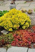 Sukkulenten und Grünpflanze im Beet vor Terrasse