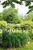Blühende Staudenbeete mit Iris im Vordergrund in einem Landschaftsgarten