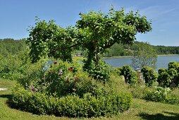 Baum, Staudenbeet und Buchshecke im sommerlichen Rasen vor See