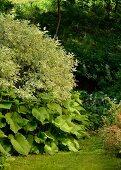 Sommerlicher, dicht bewachsener Garten am Waldrand