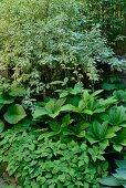 Verschiedene Grünpflanzen im dicht bewachsenen Garten