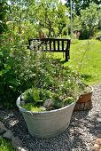 Alte Zinkwanne mit Sukkulenten und Grünpflanzen auf Kiesboden im Garten