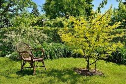 Rattanstuhl neben kleinem Baum im Garten