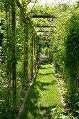 Laubengang im Garten, aus berankten Holzrahmen