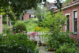 Peony in front garden of brick house with white picket fence