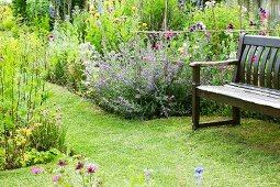 Blumengarten mit Katzenminze und Flockenblumen; auf dem gepflegten Rasen eine Gartenbank aus Holz
