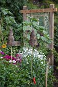 Garden canes topped with wicker cones amongst flowering perennials