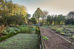 Gärtnerei-Beete mit verschiedenen Grünpflanzen, umgeben von Bäumen in der Morgensonne