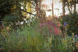 Herbstliches, wildes Gräserbeet vor Bäumen mit tiefstehender Sonne